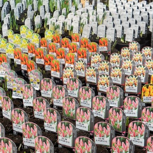 Summer Flowering Bulbs £2.49 each or 5 for £10